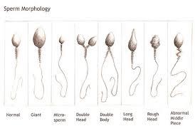 Poor Sperm Health