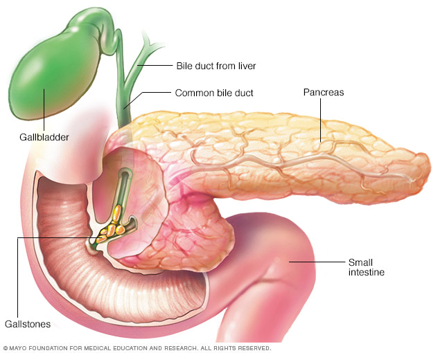 The Organ Called Pancreas