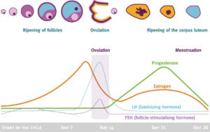 Hormonal/Ovulatory Disorder