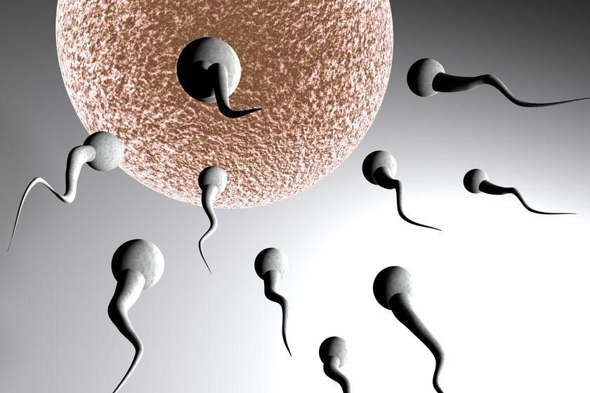 Sperm Motility and Pregnancy