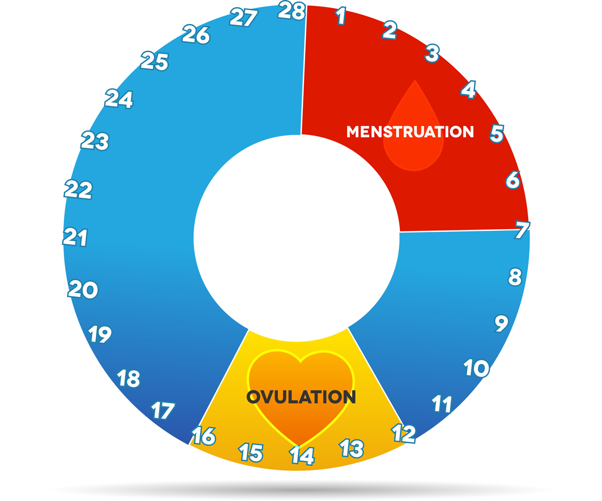 Ovulation menstruation chart