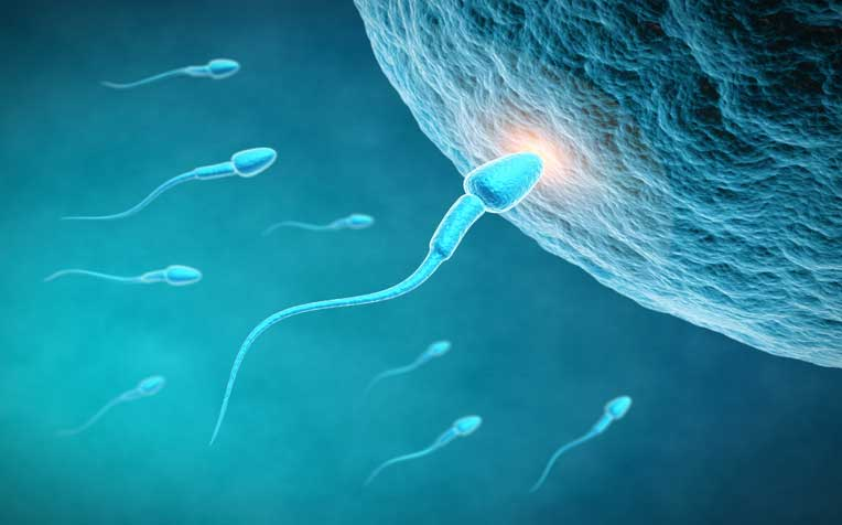 Tips to Improve Sperm Count